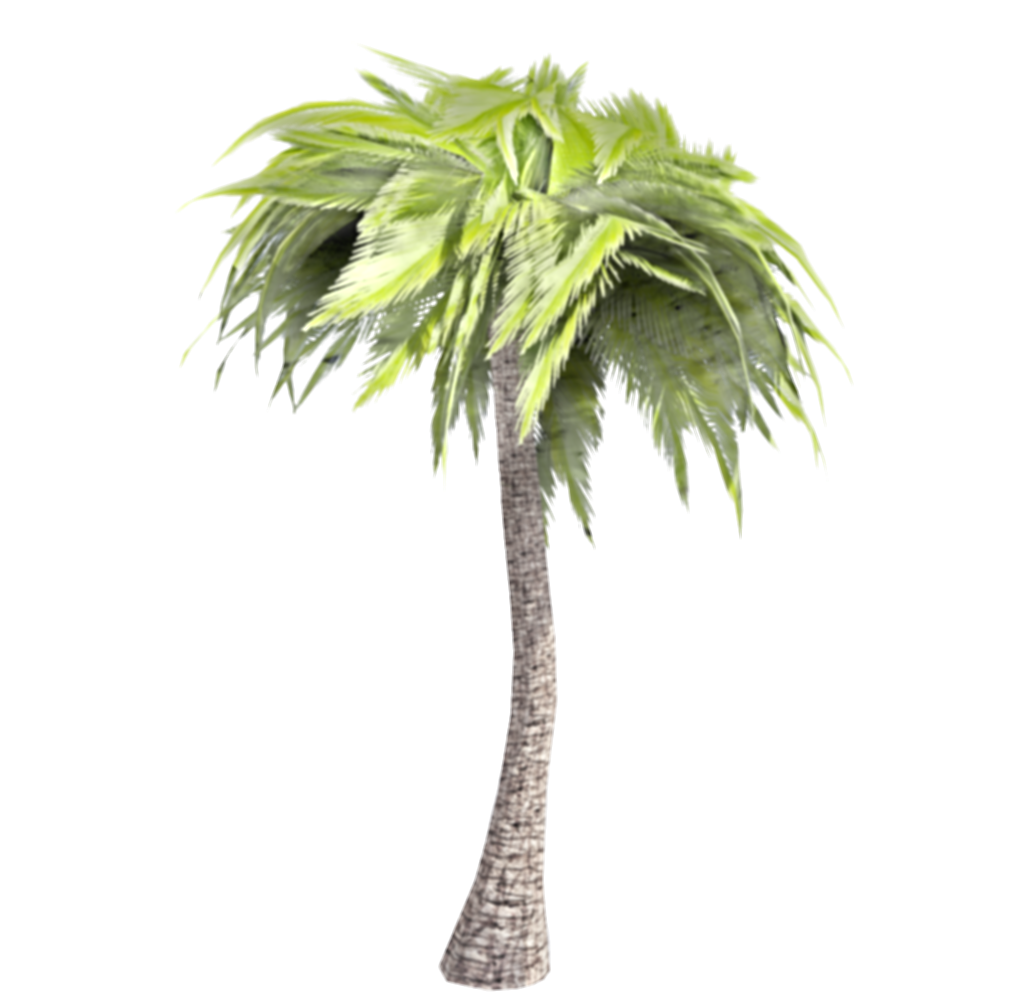 3d palm tree png