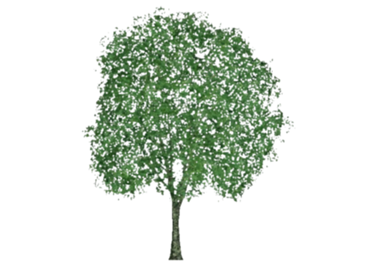 3d tree png