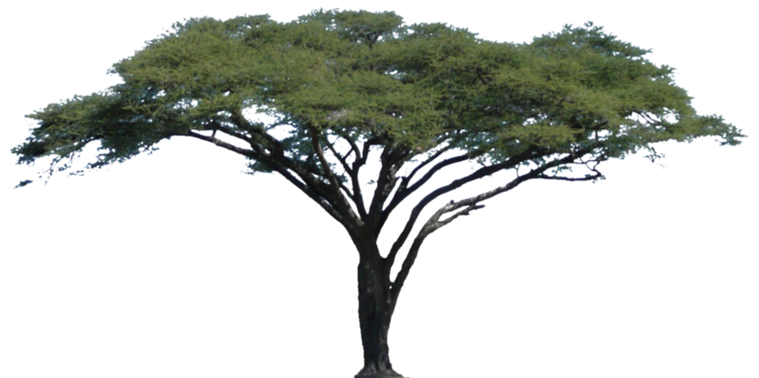 africa tree png