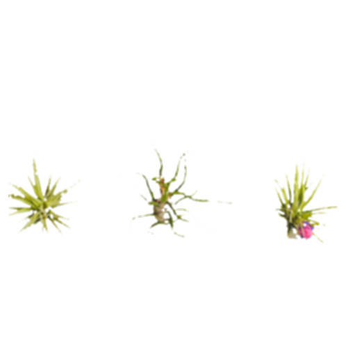 air plants png