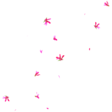 anime flower png