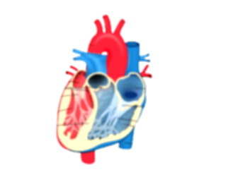 annotated drawing heart