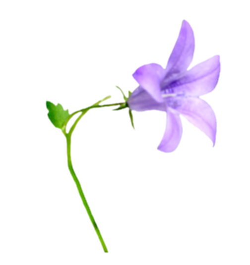 bell png flower
