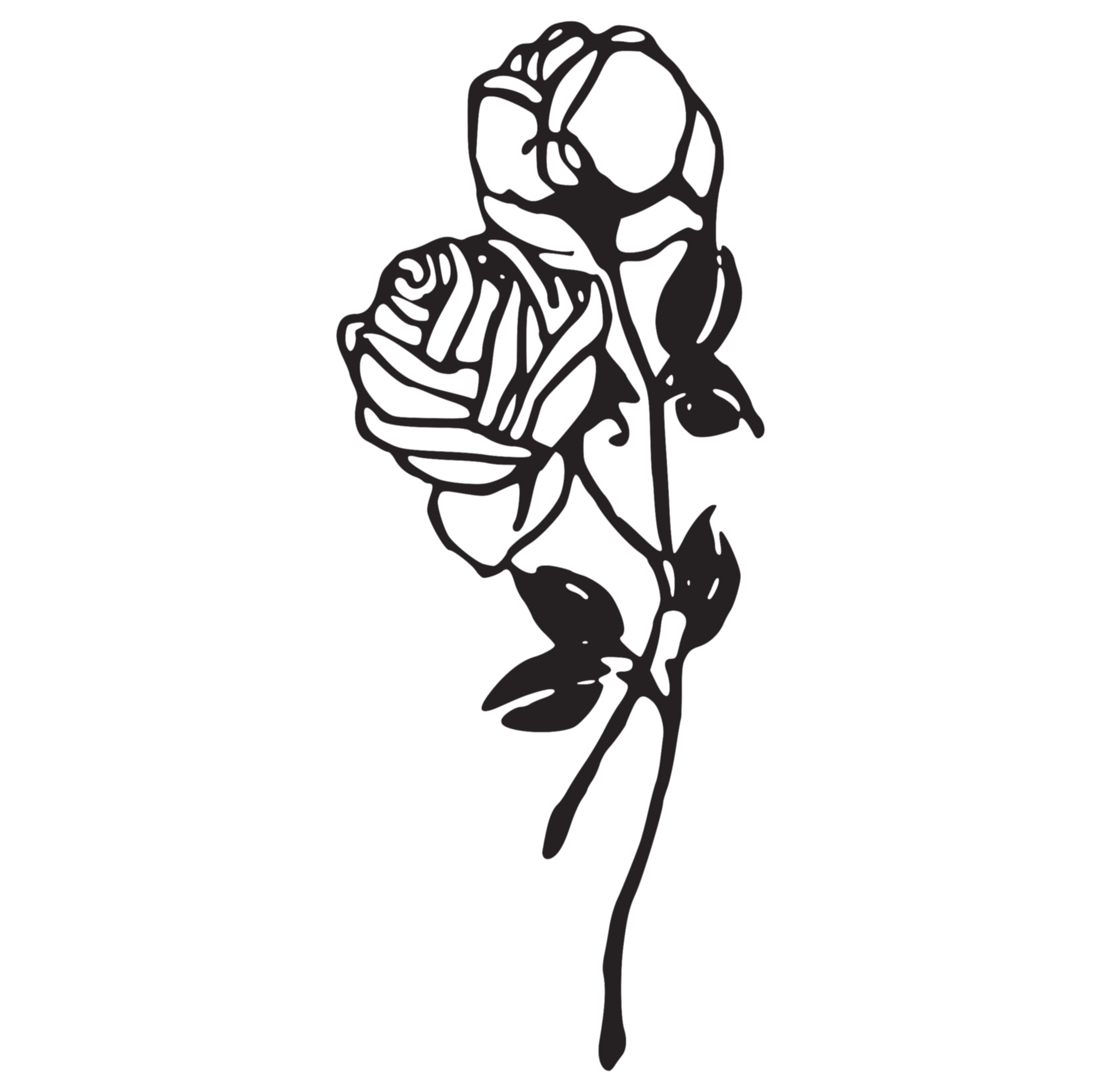 black and white rose png