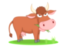cattle clipart science animal
