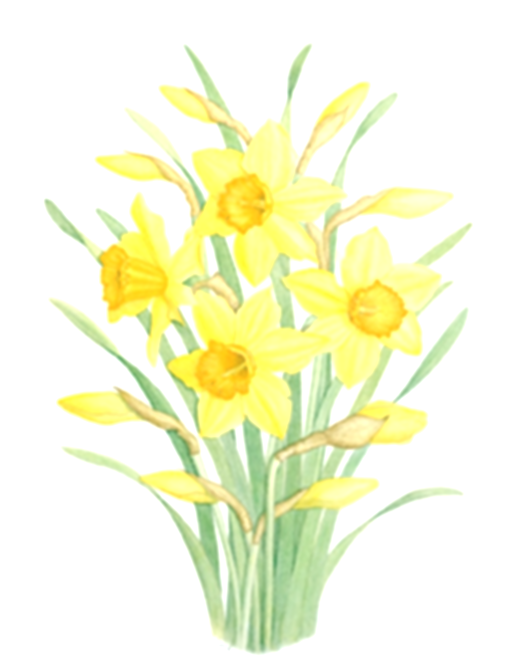 daffodil clipart easter