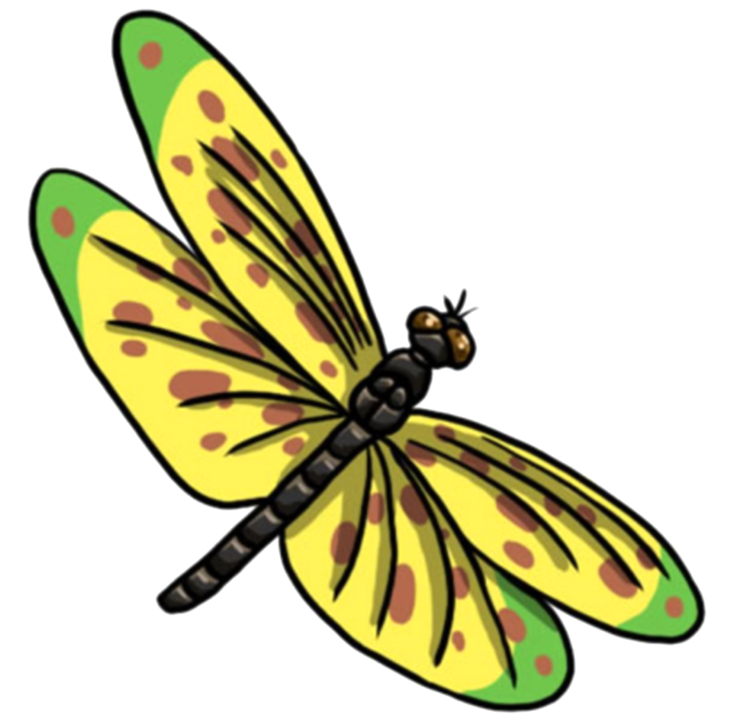 dragonfly clipart summer