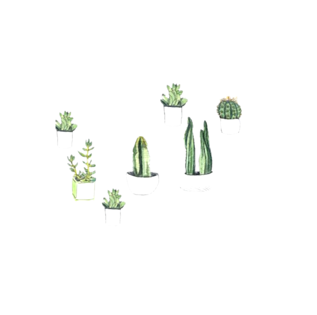 drawing cactus family