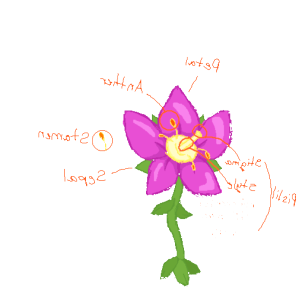 drawing science flower