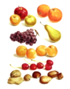 fruits clipart nuts