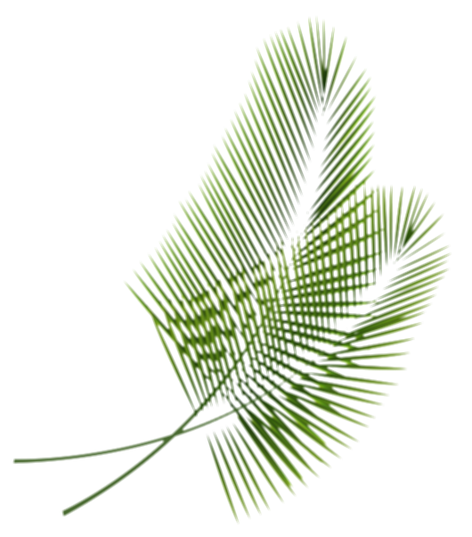 palm print green plants white background png