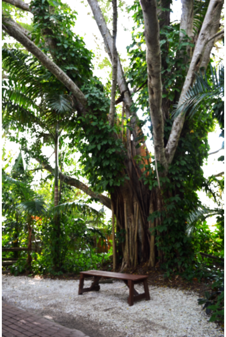 png nature background