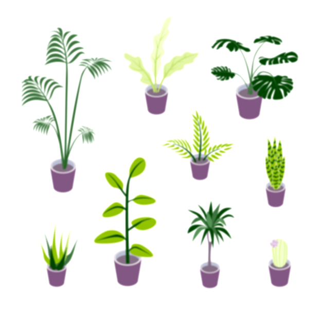 Set of vector isometric potted plants illustrations for indoor d