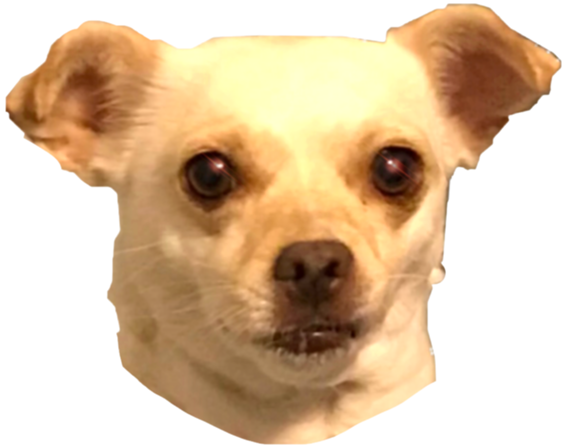 taco bell dog png